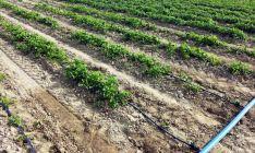 Un cultivo de regadío en la provincia./SN