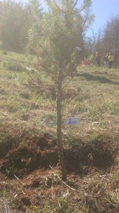 Plantación de árboles/ SN