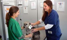 Implantación de un microchip a un perro./SN