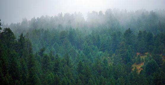Zona boscosa en los Pinares sorianos.