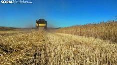 Imagen de archivo sobre la cosecha en un campo soriano. Soria Noticias.