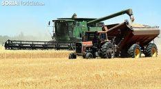 Labores de cosecha de cereal. /SN