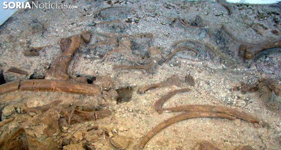 Restos paleontológicos en el museo de Ambrona. /SN