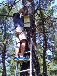 'Apadrina una colonia de murciélagos', en Valonsadero. Cedida