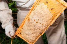 Primer plano de una colmena de abejas.